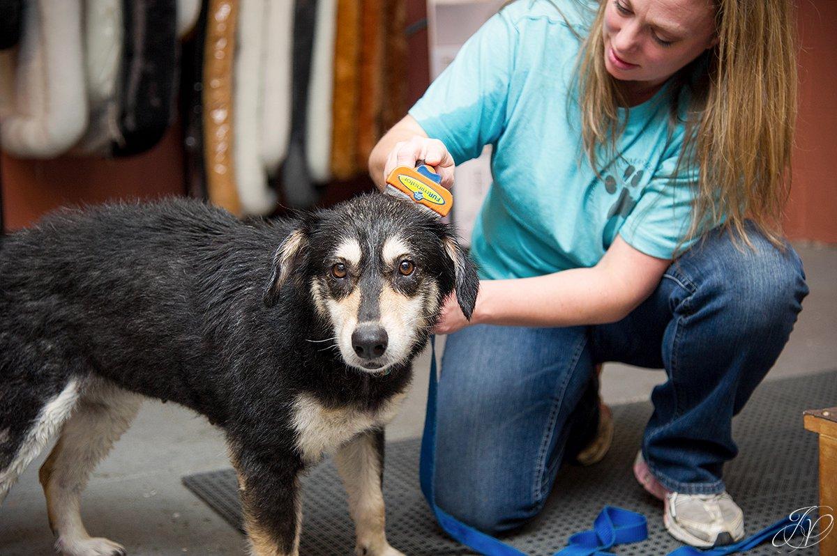 Dog getting brushed after bath, brushing a dog photo, harveys home garden and pet center, canine skin disease, regional animal shelter
