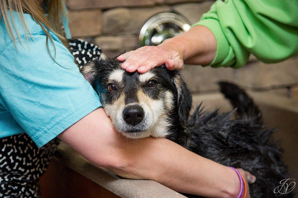 Dog getting bath, bathing a dog photo, harveys home garden and pet center, canine skin disease, regional animal shelter