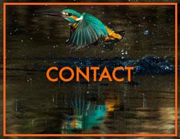 Contact Blain