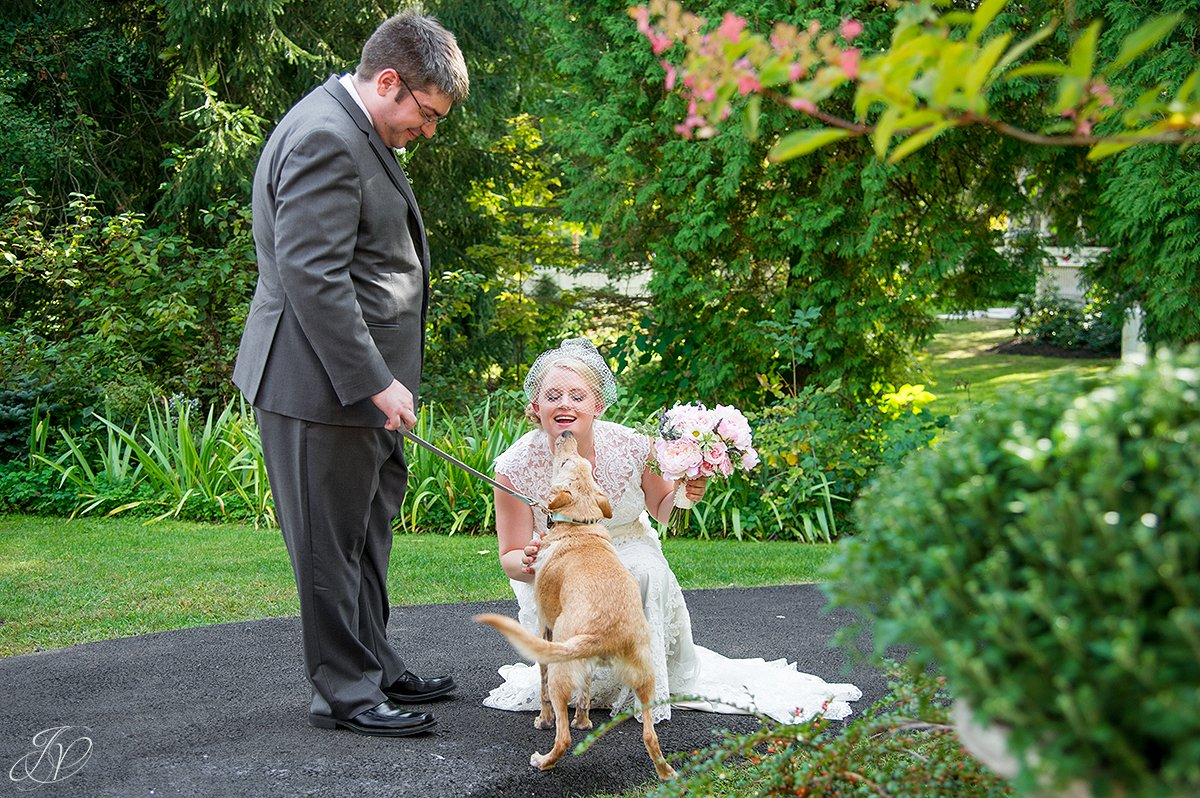 dog kissing bride on wedding day